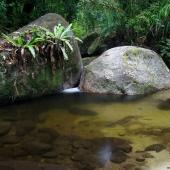 Mossman gorge (Queensland - Australie)