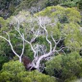 Canopée (Queensland - Australie)