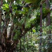 Fraser Island (Queensland - Australie)