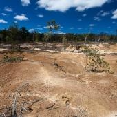 Mareeba Wetlands (Queensland - Australie)