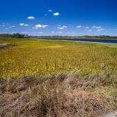 Mareeba Wetlands(Queensland - Australie)
